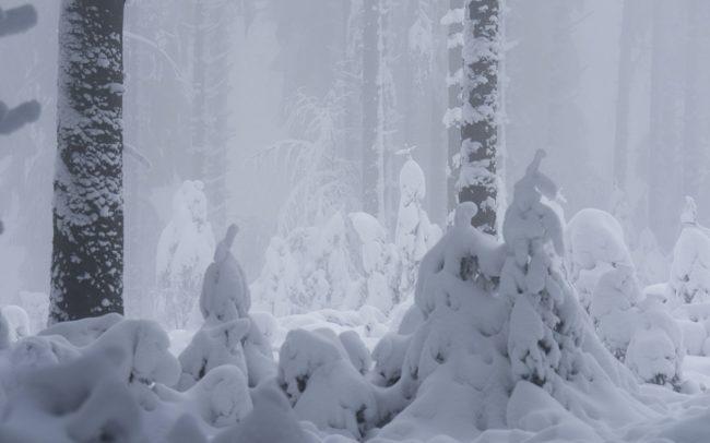 Frédéric Demeuse- Winter photography-Hautes-Fagnes-Belgique