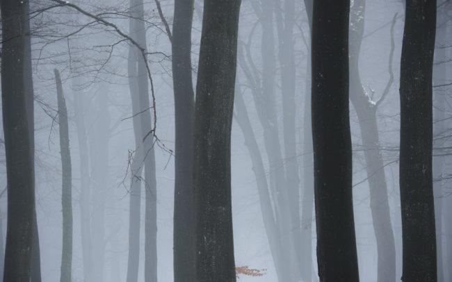 Frédéric-Demeuse-Photography-Hautes-Fagnes-Winter
