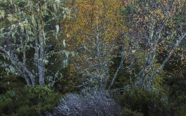 Frédéric-Demeuse-photography-Primeval-forests-Glen-Affric-Scotland