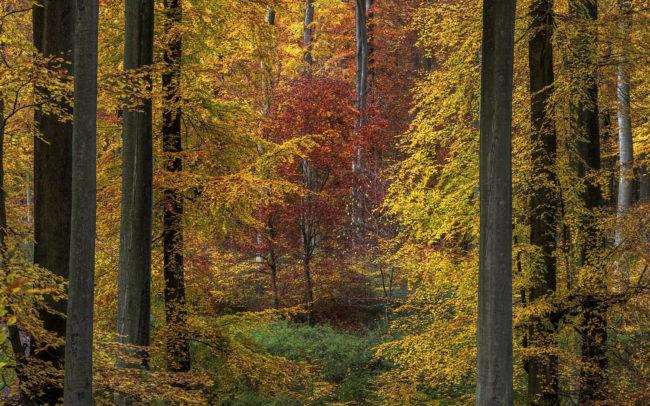 Frédéric Demeuse Forêt de Soignes