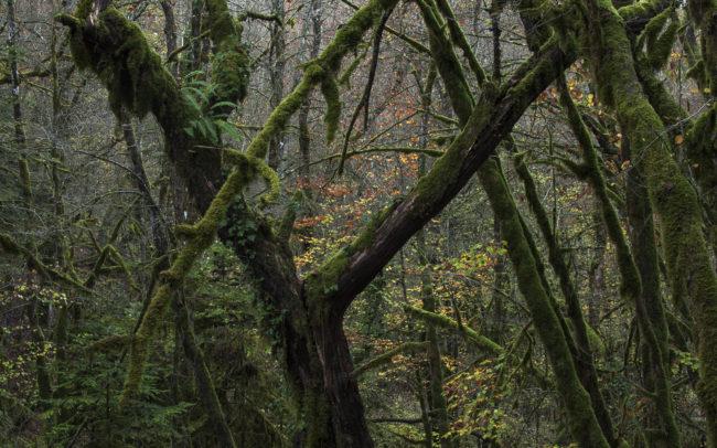 Frédéric-Demeuse-photography-Primeval-forest-Jura-Foret-primaire-France