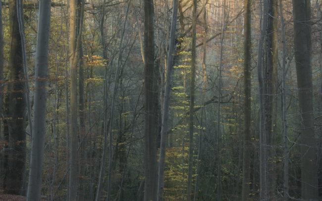Frédéric-Demeuse-Forest-photography-Foret-de-Soignes-Automne-6