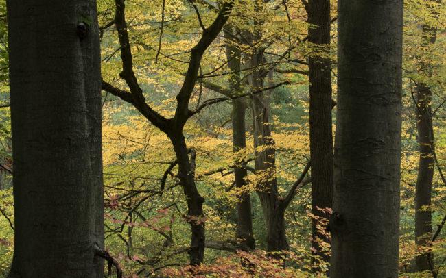 Frédéric-Demeuse-Forest-photography-Foret-de-Soignes-Autumne