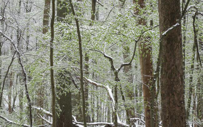 Frédéric-Demeuse-Forest-photography-Foret-de-Soignes-Mars-Unesco-site