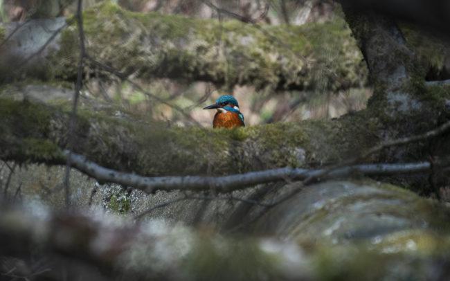 Frédéric-Demeuse-Forest-photography-Foret-de-Soignes-Mars-4