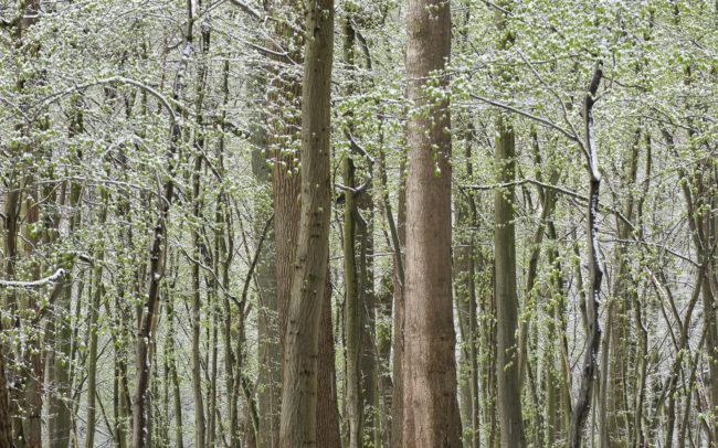 Frédéric-Demeuse-Forest-photography-Foret-de-Soignes-Mars-5