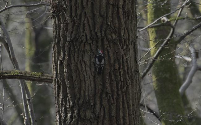 Frédéric-Demeuse-forest-photography-Foret-de-Soignes-Mars-Belgique-15 copie