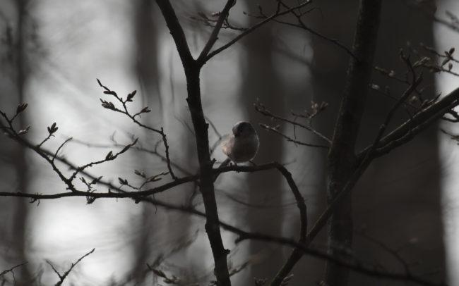Frédéric-Demeuse-forest-photography-Foret-de-Soignes-Mars-Belgique-5 copie 3