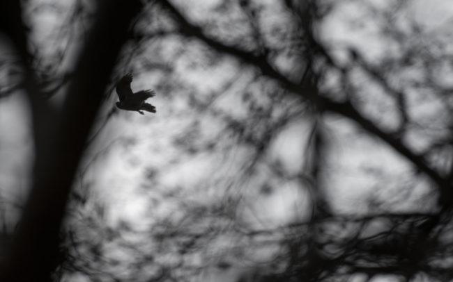 Frédéric-Demeuse-forest-photography-Autour-des-palombes-Foret-de-Soignes-Mars-Belgique