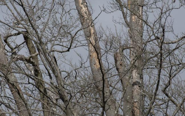 Frédéric-Demeuse-forest-photography-Foret-de-Soignes-Mars-Belgique Bird photography wildlife photographer