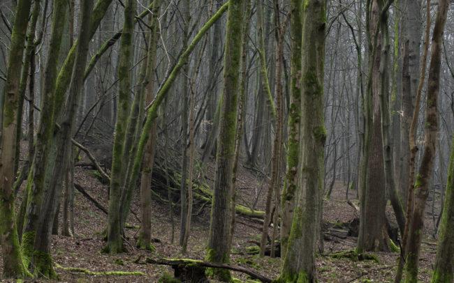 Frédéric-Demeuse-forest-photography-foret-de-soignes-32