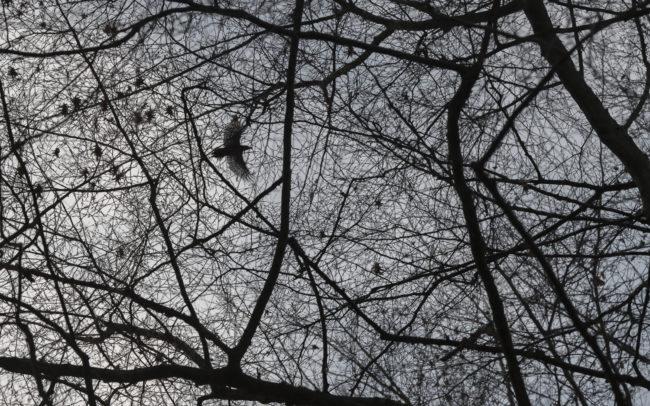 Frédéric-Demeuse-forest-photography-foret-de-soignes-31