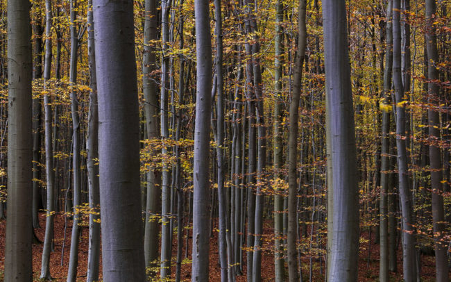 Frédéric-Demeuse-forest-photography-foret-de-soignes-6