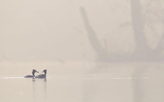 Frédéric-Demeuse-photography-wildlife-landscape-Sonian-forest-Unesco copie 2